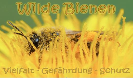 Nachlese: Bienenvortrag, 15.10.2020 im Kornhus Bad Münder