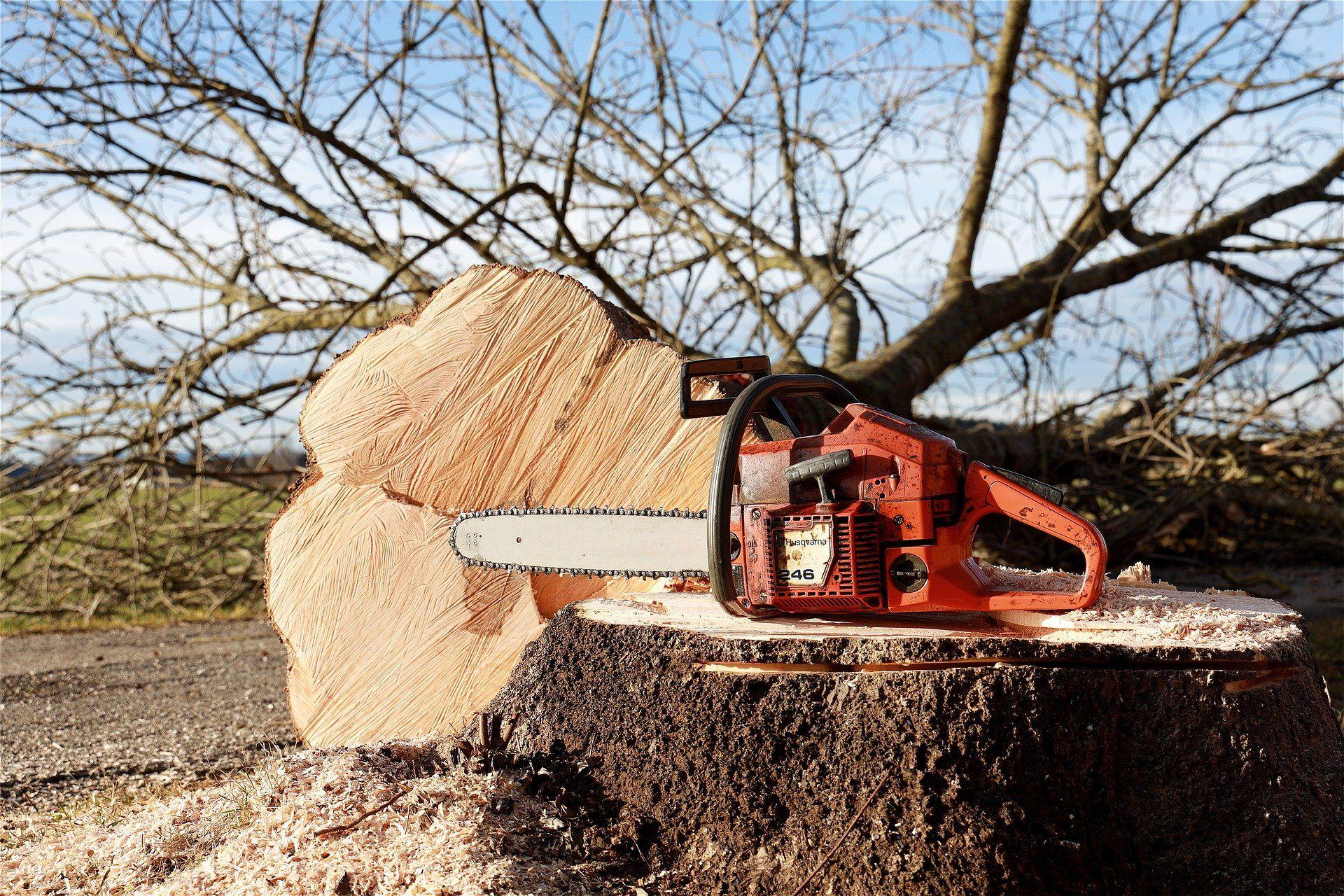 Grüne sehen sich gezwungen, Antrag zum Baumschutz zurückzuziehen