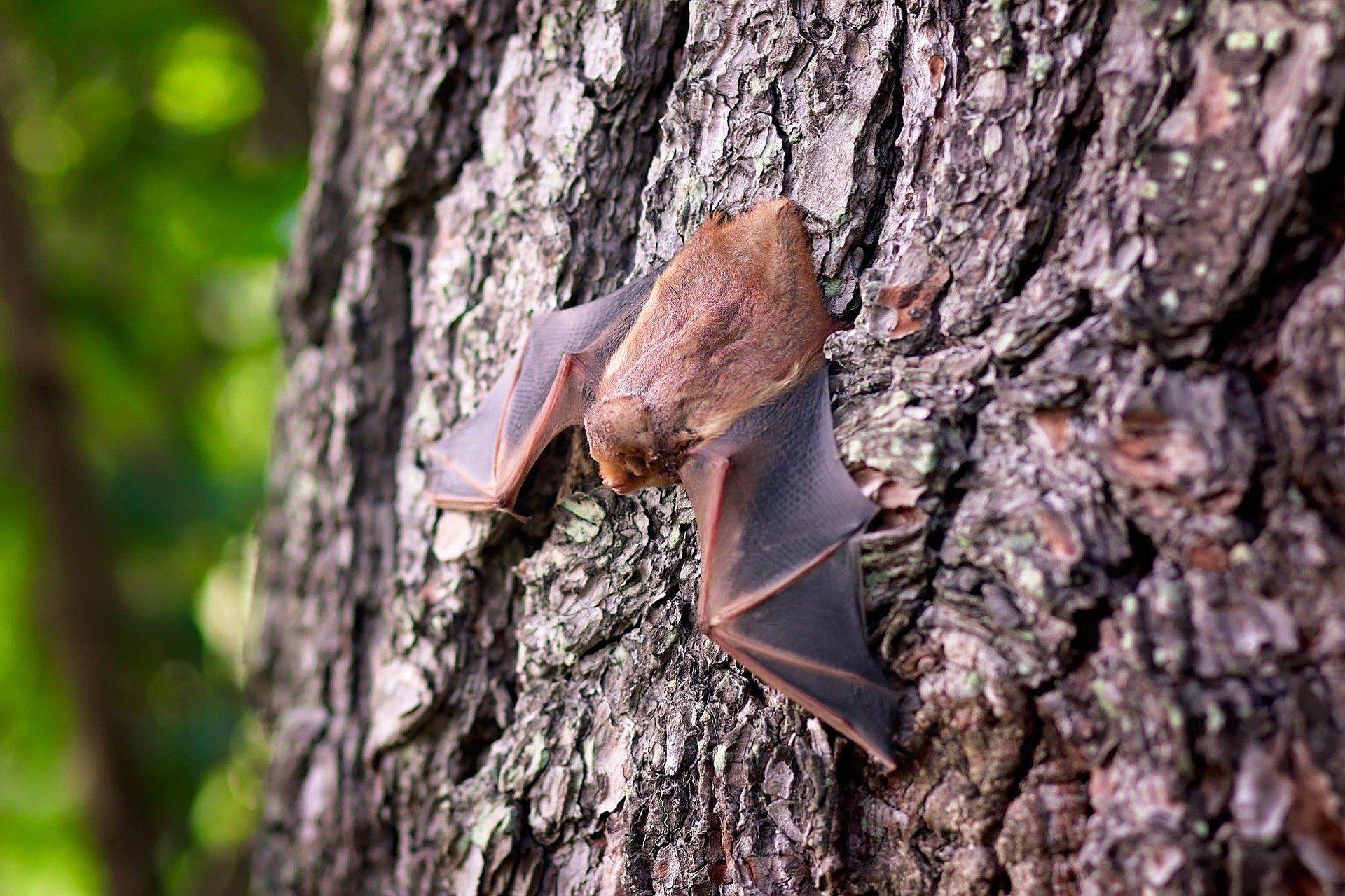 Rettet die Fledermäuse: Grüne Ratsfraktion pocht auf Gutachten